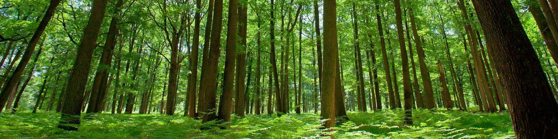 10-años-de-reforestación-01