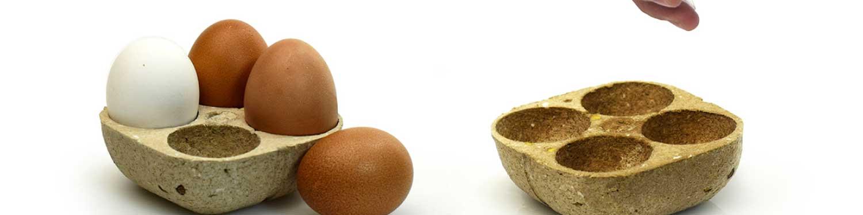01-A-plantar-con-huevos-01